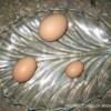 供应 环保食品 鸡蛋